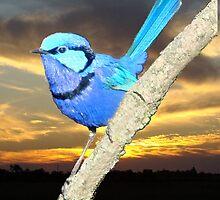 South West Birds by Coralie Plozza