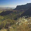 Green Desert, Texas by Tamas Bakos