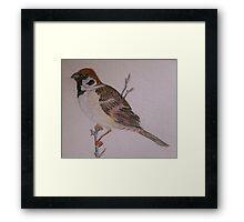 Eurasian Tree Sparrow Framed Print