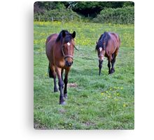 Equine Investigation A Canvas Print