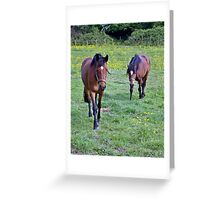 Equine Investigation A Greeting Card
