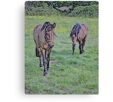 Equine Investigation B Canvas Print
