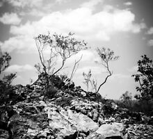 Litchfield Lookout B&W by Candice O'Neill