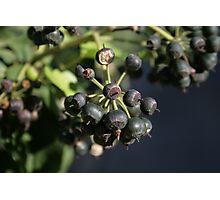 The wild fruit Photographic Print