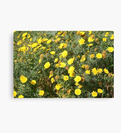 Lellux - yellow flower Canvas Print