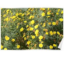 Lellux - yellow flower Poster