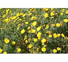 Lellux - yellow flower Photographic Print