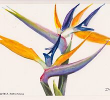 Strelitzia Flowers by Dai Wynn