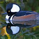 Reflections of a pretty little duck!! by jozi1
