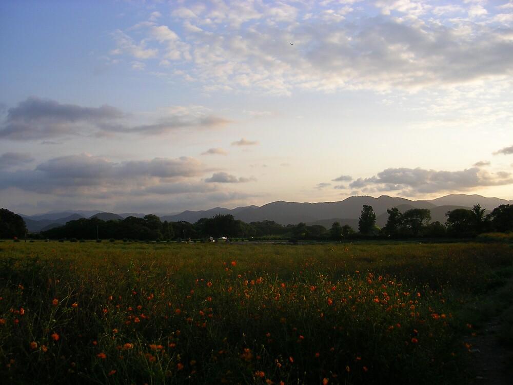 Korean poppy field by altix