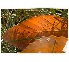 Beech Leaf Poster