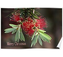Merry Christmas - Australian Bottlebrush Poster