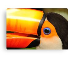 Quaint Bird: Portrait of a Toco Toucan at Iguassu, Brazil. Canvas Print