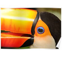 Quaint Bird: Portrait of a Toco Toucan at Iguassu, Brazil. Poster