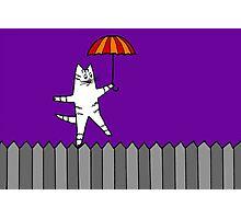 Fence Cat 2 Photographic Print