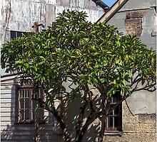 Shady Tree. by GW-FotoWerx