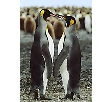 Penguin Love Photographic Print