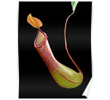 Nepenthes Poster