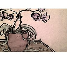 Charcoal Orchids Photographic Print