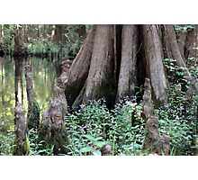 Cypress Tree & Wildflowers Photographic Print