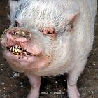 Wilbur the smiling pig by Jamaboop