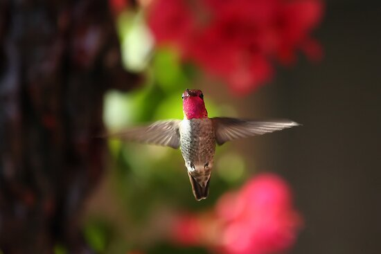 Hovering Hummer by Daniel J. McCauley IV