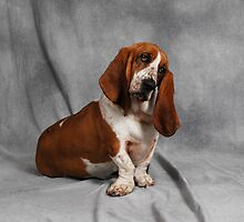 Bassets Everywhere by ronibgood