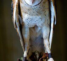 Barn owl by Paul Grinzi