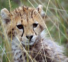 Cheetah Cub by JaneRia