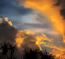 Tropical Iridescence, Darwin. by Ern Mainka