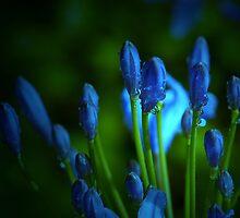 Blue rain . . . by Rosalie Dale