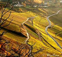 Golden winefields... by Wim Conix
