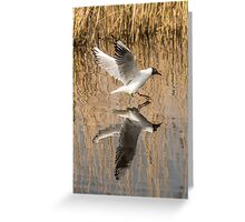 Black Headed Gull Mirror Image Greeting Card