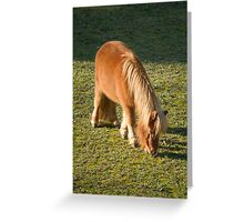 horse pony  in the farm Greeting Card