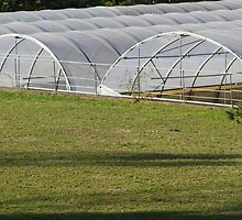 greenhouse in the farm by spetenfia