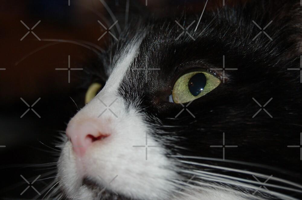 Binky Cat by ApeArt