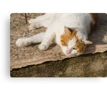 cute cat Canvas Print