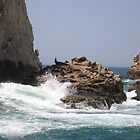 Sunning Sea Lions & Crashing Waves by Harriette Knight