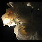 Petals of Desire by PositivNegativs