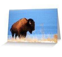 Island Buffalo Greeting Card