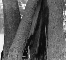 TREE TENT by sophia071