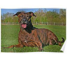 Brindle Terrier - Si Poster