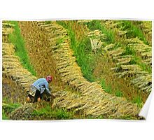 Rice Terrace5. Poster
