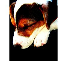 Asleep Photographic Print