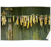 Drying corn cobs. Poster
