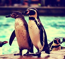 Penguin Parade at London Zoo  by broganroselynde