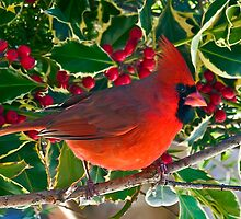 Berry Red by Benjamin Young