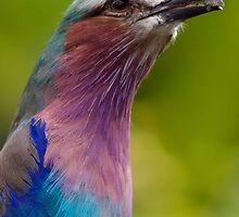 Colour Bird by DannyJFord