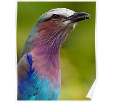 Colour Bird Poster