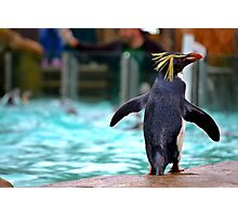 Penguin Parade at London Zoo ZSL  Photographic Print